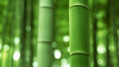 all you want to know about bamboo 2 1 240x135 تعرف على الفوائد المدهشة للخيار