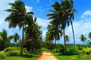 bnatsoftcom1477263845216 1 1 300x200 جزر كوك النيوزيلاندية لشهر عسل رومانسي وهادئ